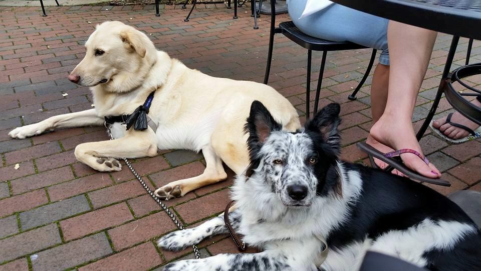 Dog Training Durham, NC | Dog Training Near Me | Always Pawsitive Dog Training