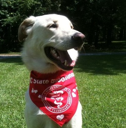 Ludo   Dog Trainers Near Me   Always Pawsitive Dog Training