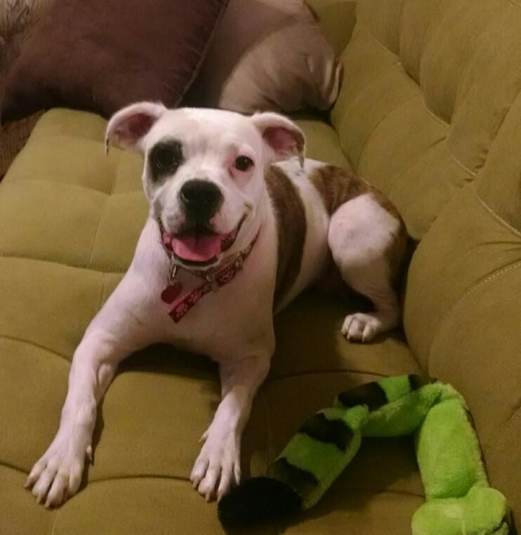 Dog Training | Dog Trainers Near Me | Always Pawsitive Dog Training