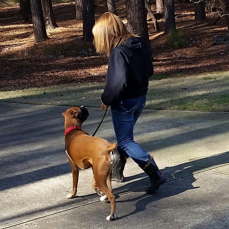 Durham Dog Training | Certified Dog Trainers Near Me