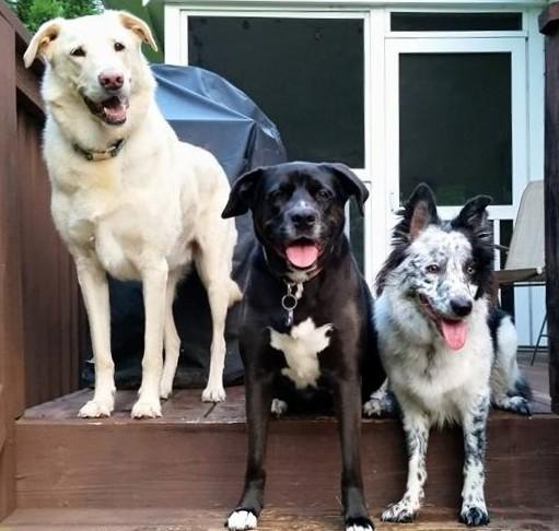 Raleigh, NC dog training