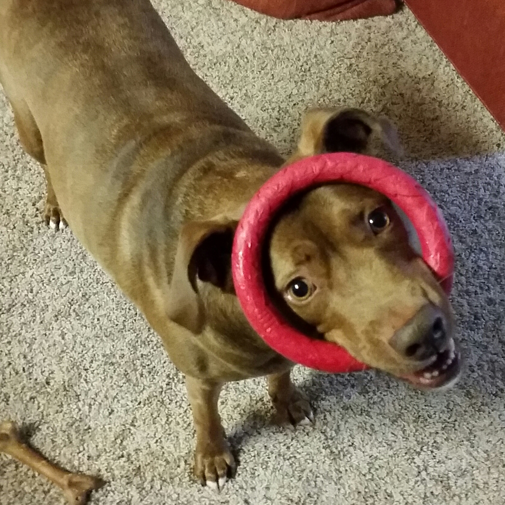 Cary, NC dog training