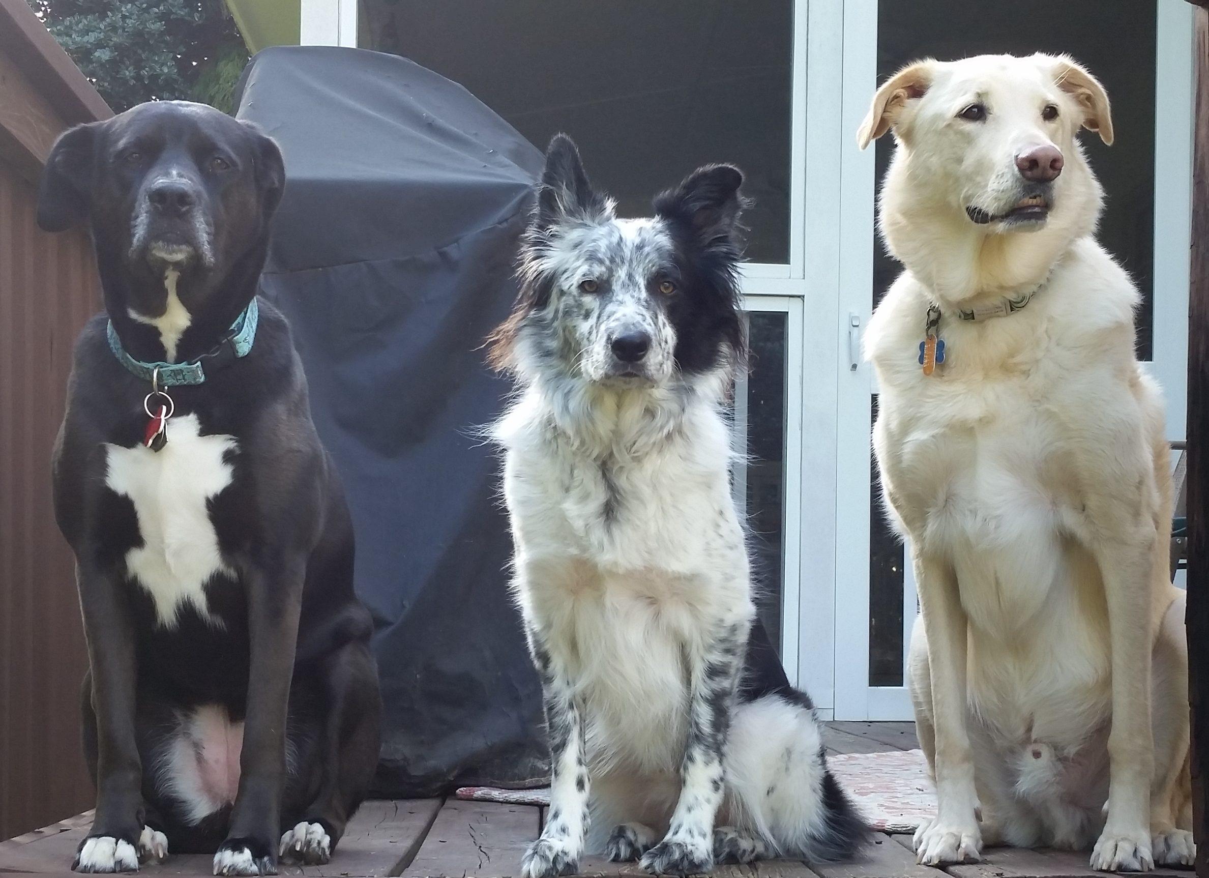 Dog Training Durham, NC   Dog Training Near Me   Always Pawsitive Dog Training