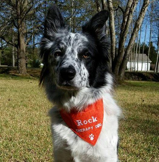 Puppy Obedience Training   Durham Puppy School   Always Pawsitive Dog Training